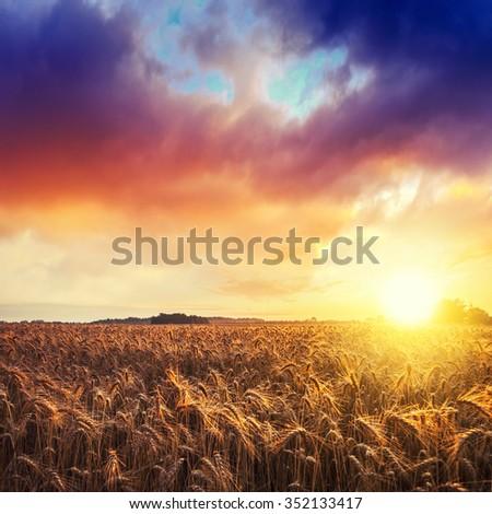 Magic sunrise with wheat field in summer Hungary - stock photo