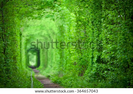 Magic Tunnel of Love, green trees and the railroad, in Ukraine. Focus on the foreground, background is defocused - stock photo