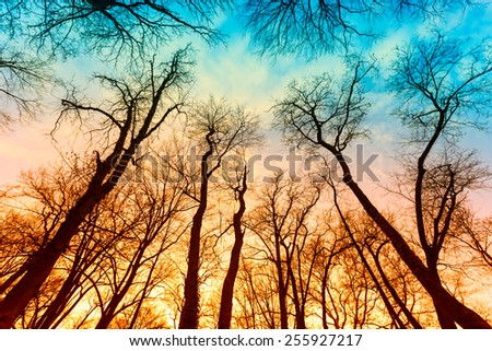 Magical bare trees of an autumn forest - stock photo