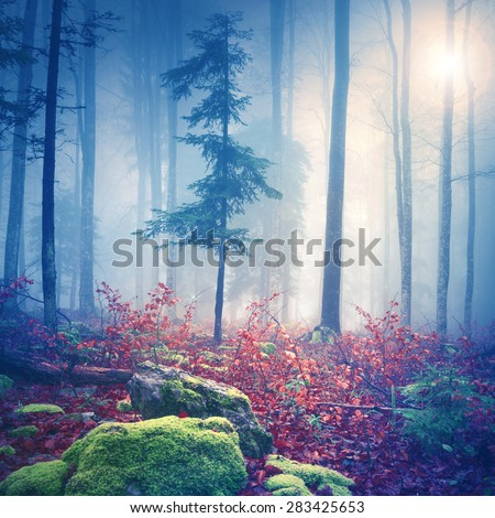 Magical colorful foggy forest with lovely sun in background. Color filter effect used. Beautiful fantasy autumn woodland was taken in south-east Slovenia. - stock photo