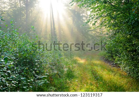Magical dawn in forest. - stock photo