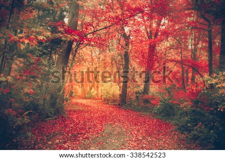 Magical forest with autumn colors and  red leaves - stock photo
