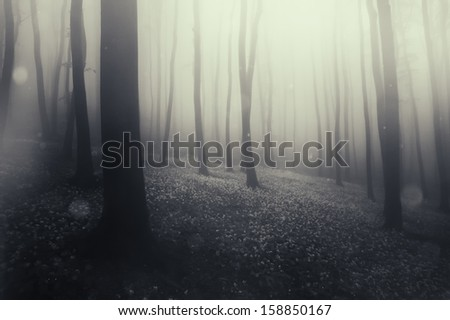 magical forest with fairies - stock photo