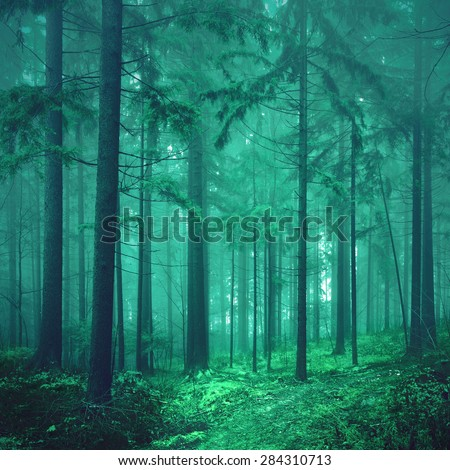 Magical green colored foggy fairytale forest background. Photo was taken in south east Slovenia, Europe. Color filter effect used. soft focus. - stock photo