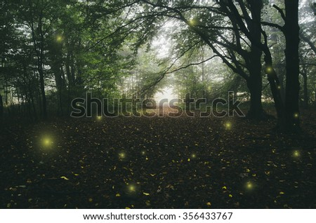 magical lights in forest - stock photo