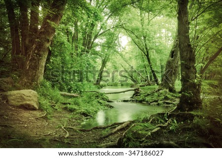 Magical summer swamp deep in the forest with leaning oak trees creating tunnel - stock photo