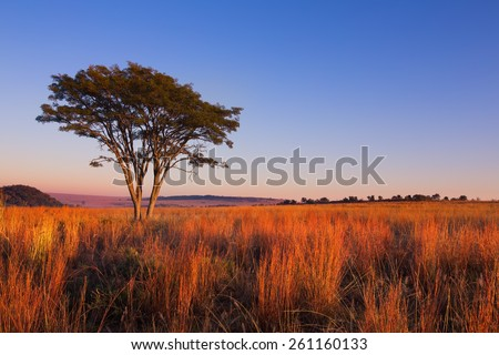 Magical sunset in Africa with a lone tree on a hill and thin clouds - stock photo