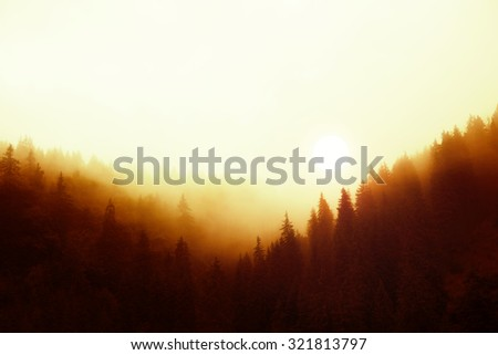 Magical sunset over misty pine tree forest - stock photo