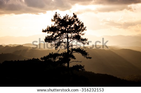 magical sunset with tree - stock photo