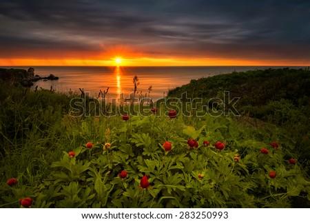 Magnificent sunrise view with beautiful wild peonies on the beach near Kavarna, Bulgaria - stock photo