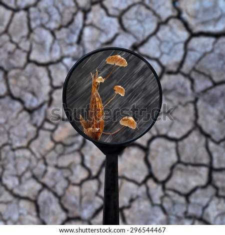 magnifying on dry cracked the earth - stock photo