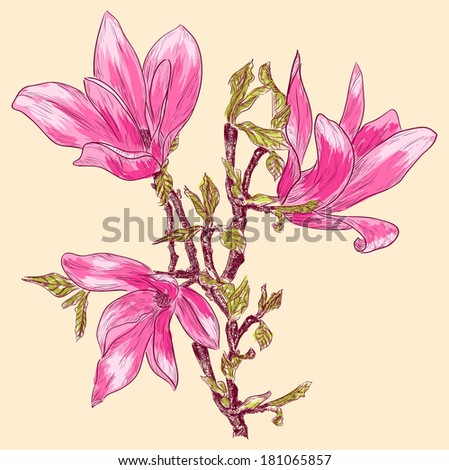 Magnolia branch. Raster version - stock photo
