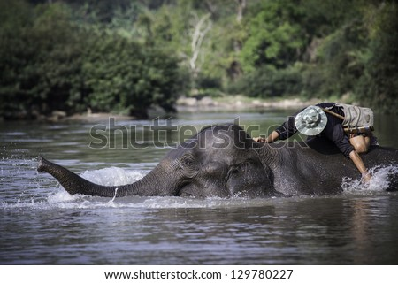 Mahout bathing his elephant in the river - stock photo
