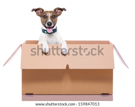 mail dog in a very  big moving box - stock photo