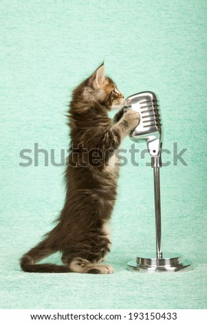 Maine Coon kitten standing on hind legs with paws on faux vintage microphone on stand on light mint green background  - stock photo