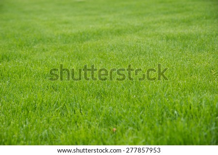 maintained green grassy area / grass - stock photo