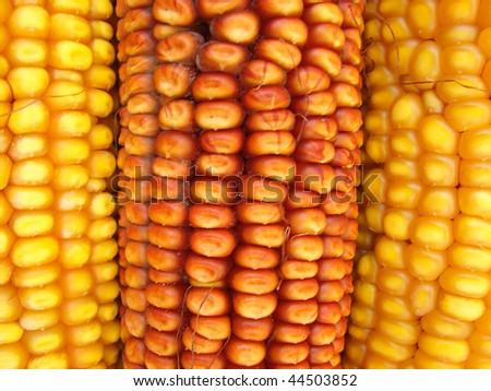 Maize's Pattern - stock photo
