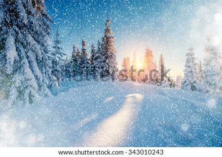 Majestic landscape glowing by sunlight in the morning. Dramatic wintry scene. Location Carpathian national park, Ukraine, Europe. Ski resort. Beauty world. Instagram toning effect. Happy New Year! - stock photo