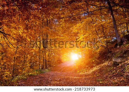 Majestic landscape with autumn leaves in forest. Carpathian, Ukraine, Europe. Beauty world. Retro filtered. Toning effect. - stock photo