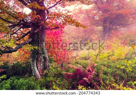 Majestic landscape with autumn trees in forest. Carpathian, Ukraine, Europe. Beauty world. Retro filtered. Toning effect. - stock photo