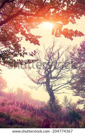 Majestic landscape with autumn trees in forest. Carpathian, Ukraine, Europe. Beauty world. Retro filtered. Toning effect. - stock photo