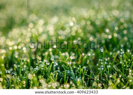 majestic sunny morning, abstract and dreamy blurred grass drops of dew.  shallow depth of field. used as background. color in nature. fabulous background - stock photo