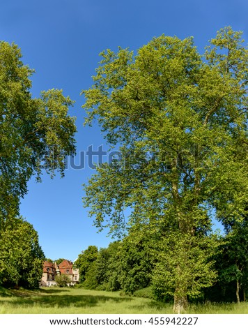 Majestic trees in the park of Marquardt Castle near Potsdam, Germany - stock photo