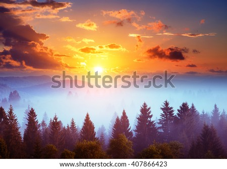 Majestic view of the woods glowing by sunlight at twilight. Dramatic and picturesque morning scene. Location place: Carpathian, Ukraine, Europe. Beauty world. Retro and vintage toning effect. - stock photo