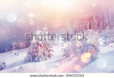 Majestic winter landscape glowing by sunlight in the morning. Dramatic wintry scene. Location Carpathian, Ukraine, Europe. Beauty world. Bokeh light effect, soft filter. Instagram toning effect. - stock photo
