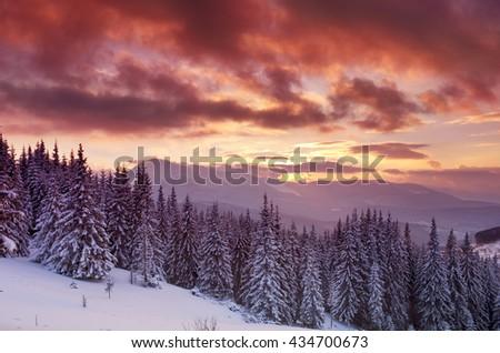 Majestic winter landscape glowing by sunlight in the morning. Dramatic wintry scene. Location Carpathian, Ukraine, Europe.  - stock photo