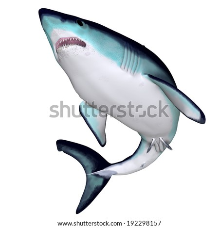 Mako Shark - The Mako is a large species of predatory shark that can grow to 4.45 meters or 14.6 feet. - stock photo