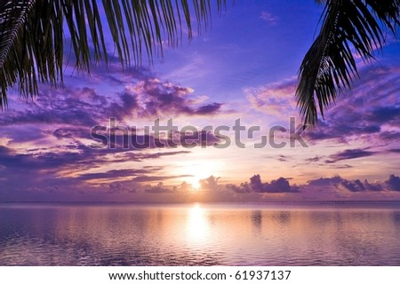 Maldivian Sunset under Palms - stock photo