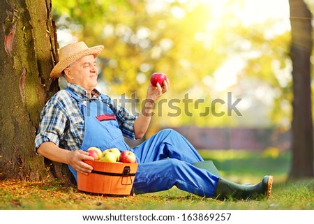 Male agricultural worker in overalls looking at apple in orchard - stock photo