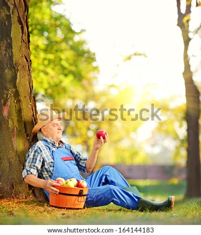 Male agricultural worker in overalls with basket of harvested apples sitting in orchard, and looking at apple, shot with a tilt and shift lens - stock photo