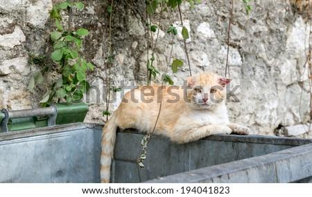 Male alley cat sat on a rubbish bin - stock photo