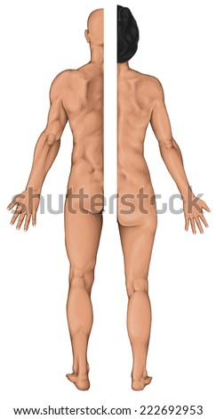Male and female anatomical body, surface anatomy, human body shapes, anterior posterior view, parts of human body, general anatomy - stock photo