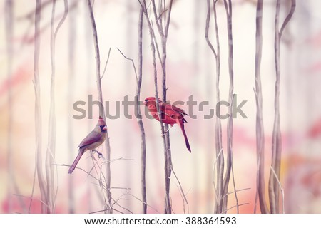 Male and Female of Northern Cardinal - stock photo