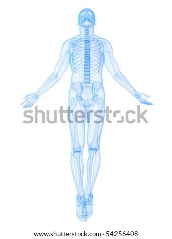 male body rise - stock photo