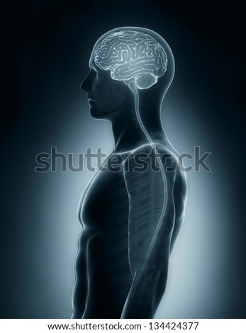 Male Brain and spinal cord medical x-ray scan - stock photo