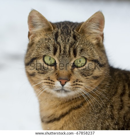 male cat's face - stock photo