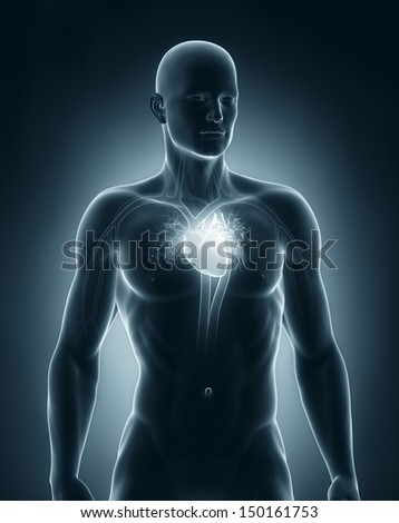 Male circulatory system anterior view - stock photo