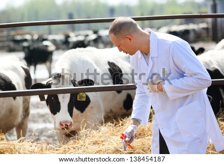 male cow veterinarian at the farm takes analyzes - stock photo