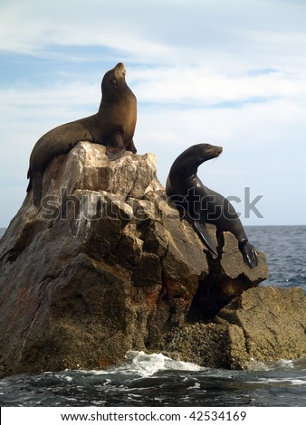 Male & female California Seals commonly called Sea Lions bark on the southern most point of Land's End at the tip of the Baja in Mexico. - stock photo