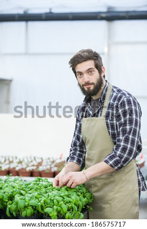 Male florist working indoors   - stock photo
