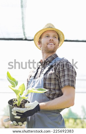 Male gardener looking away while holding potted plant at greenhouse - stock photo