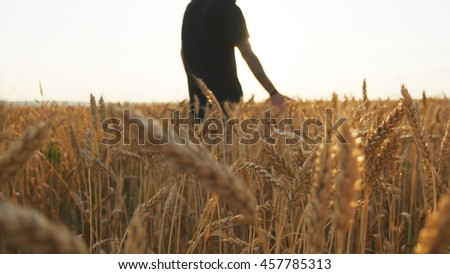 Male hand moving over wheat growing on the field. Young man running through wheat field, rear view. Man walking through wheat field, touching wheat spikes at sunset - stock photo