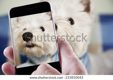 Male hand with smartphone taking a photo of a dog - stock photo