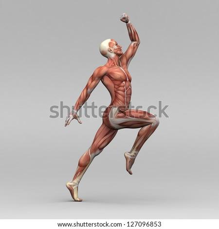 Male human muscles - stock photo