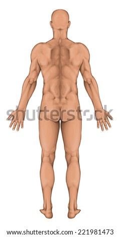 Male, masculine, man's anatomical body, human body shapes, posterior view, full body - stock photo