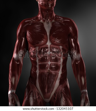 Male naked with visible muscles - stock photo